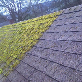 roof moss cleaned